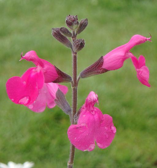 607m-pink169.jpg